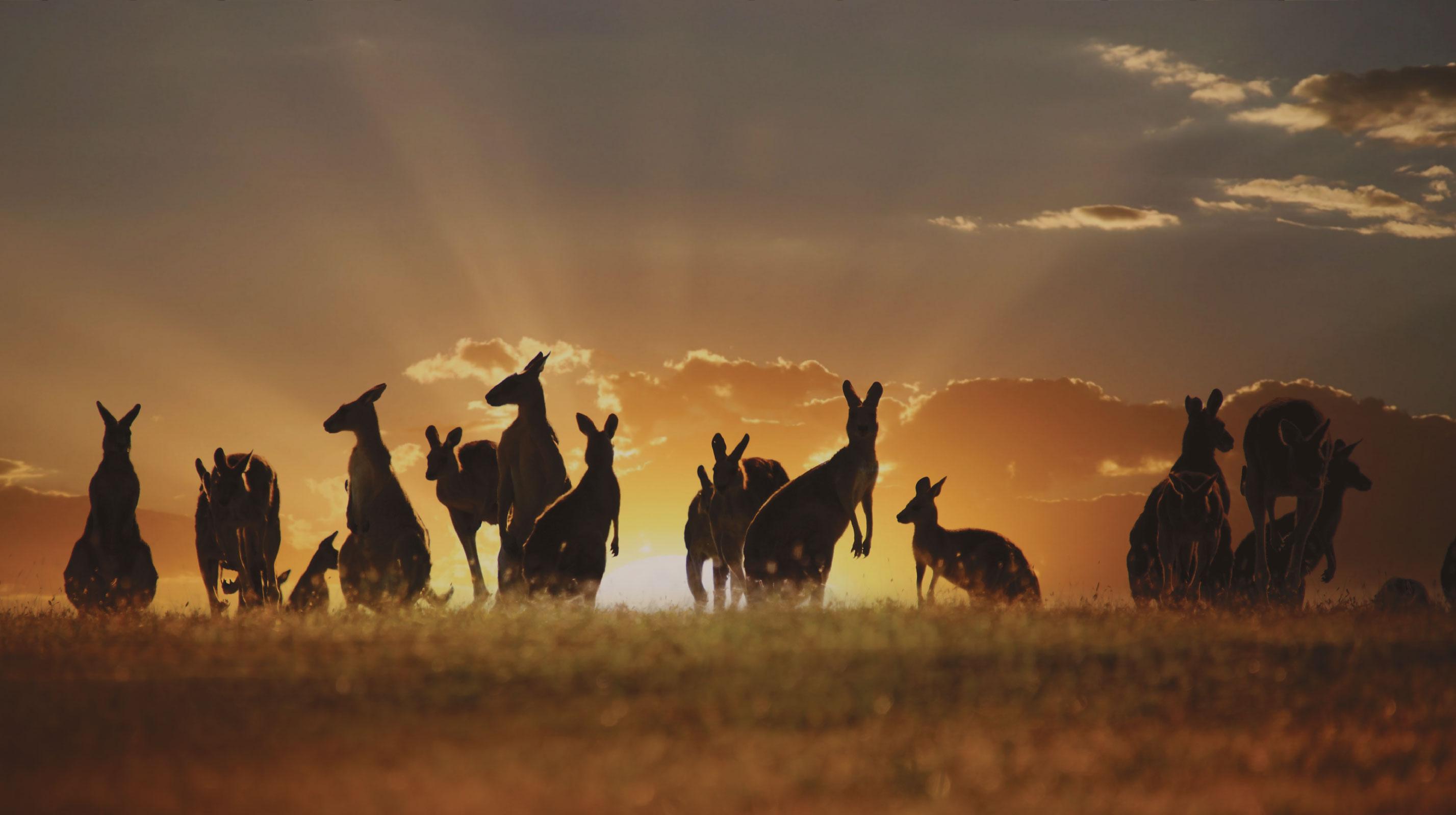 Estudia y trabaja en Australia